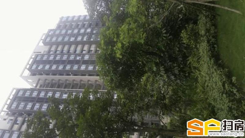 南沙城自贸区公寓仅售50万