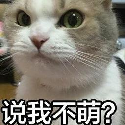 经纪人杨家村